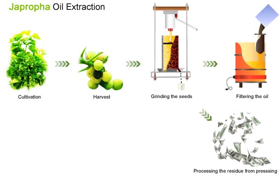 Jatropha Oil Extraction Methods Of Jatropha Oil Extraction